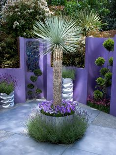 Fusion gardens combine several different design elements into one eclectic space. This purple garden centers around a small palm tree and incorporates whimsical topiaries. Spike lavender plants continue the color scheme.