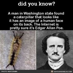 Awesome WTF Fact - Interesting Random Fun Facts - A,azing Fact You Probably Didn't Know Wow Facts, Wtf Fun Facts, Funny Facts, Funny Memes, Hilarious, Random Facts, Random Stuff, True Facts, Creepy Facts