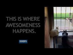"""Have you ever wondered where the phrase """"scaredy cat"""" came from? Scaredy Cat 2016 Coldwell Banker Awesomeness Ad Glen Hopkins, REALTOR Coldwell Banker M. Have You Ever, Lol, Shit Happens, Fun"""