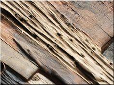 öreg tölgyfa falburkolat