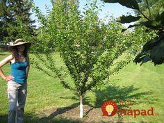 Trik, ktorý používali naši predkovia a môže poslúžiť aj vám! Permaculture, Gardening Tips, Cowboy Hats, Lawn And Garden