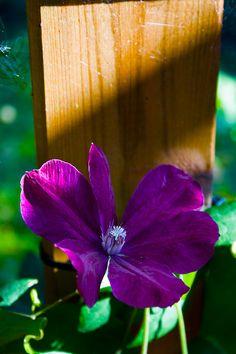Kukka laudassa.