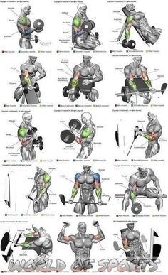 Shoulder Workout Routine, Full Body Workout Routine, Best Chest Workout, Chest Workouts, Gym Workout Chart, Gym Workout Tips, Fitness Workouts, Body Workouts, Workout Bodyweight