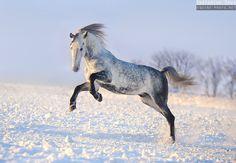 Winter 2012-2013 - Equine Photography by Ekaterina Druz