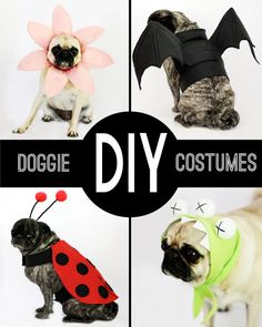 round-up: DIY Dog Costumes || small friendly http://www.turmericfordogs.com/blog