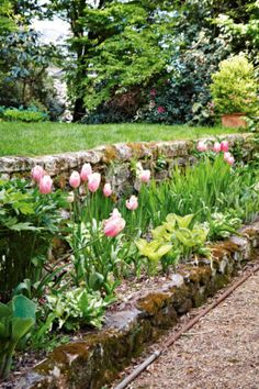 tulips + stone