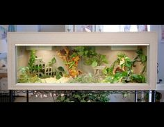bearded dragon habitat | Reptile Cages - Bearded Dragon cage - Snake cage - Cage stands ...