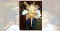 Chelydra Serpentina ANPANA Novara e Polizia Locale di Oleggio intervengono per una Tartaruga Azzannatrice