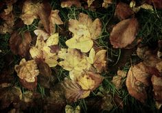 Autumn leaves are falling down... - null