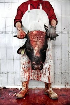 Shocking Slaughterhouse Shoots - 'The Hidden Death' by Tommaso Ausili Reveals Some Horrors (GALLERY) Cane Corso, Sphynx, Chinchilla, Rottweiler, Pitbull, Otter, Creepy, Scary, World Press Photo
