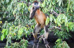 Mono en la Isleta de Granada. https://flic.kr/p/foGuvQ   Granada-Nicaragua-29.jpg