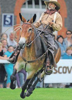 "Western RidingAmerican Cowboy & Mule ""JOB"""