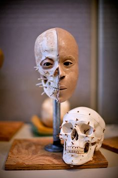 A Snapshot into the Life of a Forensic Anthropologist. If not art, this!