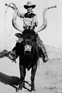 Vintage photo, circa of a cowboy riding a longhorn steer Longhorn Cattle, Longhorn Steer, Harley Davidson Trike, Rodeo Cowboys, Weird Vintage, Ape Hangers, Bull Riding, Cowboy And Cowgirl, Cowboy Hats