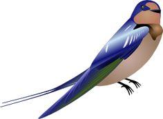 Česká přísloví Purple Martin, Image Clipart, Art Carte, Swallow Bird, Blue Wings, Clip Art, Png Photo, Bird Feathers, Birds