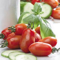 Tomato Plants - San Marzano 2