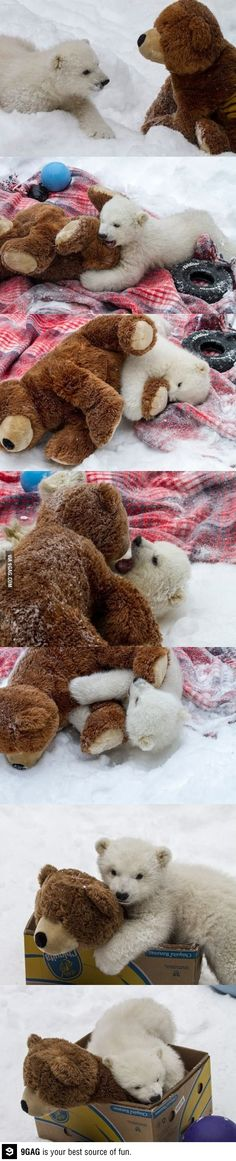 I can't handle how cute this is. I love that in some of the pictures the toy appears to be winning.