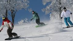 we provide you details and information about all skiing resorts in japan.we give you the information about best snowfall area and their suited  resorts.you.Japan Powder Ski Holidays team members have been skiing and snowboarding Japan Powder for 22 years (since 1992).There are many resorts  for skiing in japan.you can search about any skiing resort as your desire.