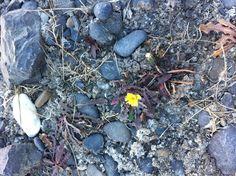 사막 위에 핀 이름 모를 노란 꽃