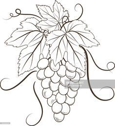 Arte vectorial : Bunch Of Grapes On White