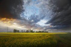500px / Canola field by jordan ho