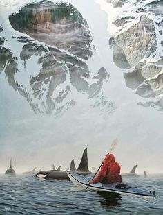 Kayaking with killer whales | Amazing Pictures – Furkl.Com