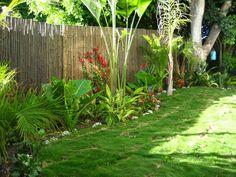 aménagement jardin avec banier pelouse et palmier