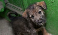 One Woman's Mission to Save Sri Lankan Street Dogs