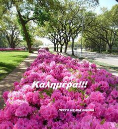 Good Morning Messages, Good Morning Good Night, Mini, Good Morning Wishes