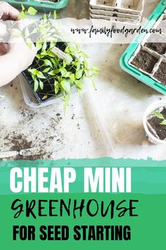 Check out these ideas of cheap mini greenhouse for seed starting. Starting seeds is super fun and a lot cheaper than buying seedlings. This post is full of ideas for creating cheap mini-greenhouses that you can use for seed starting. Gardening For Beginners, Gardening Tips, Indoor Gardening, Vegetable Gardening, Container Gardening, Beef Recipes, Cooking Recipes, Mini Greenhouse, Healthy Fruits