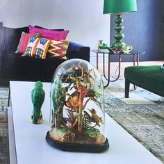 Prachtige fotoreportage van eigen huis & interieur ..... papegaaien te koop bij The Finch