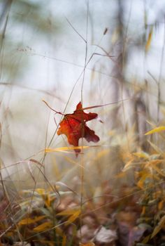 "~ Autumn ~ "". . . the world's oldest performance art, and everything we see is celebrating ~ Shauna Niequist"