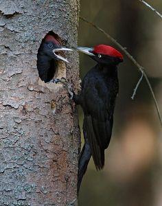 Bird photo by Helge Sorenson