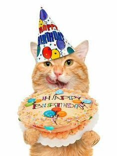 If You Are Looking For Birthday Cat Images For Your birthday cat Party So You Are On Right Place , we Have Some Best happy Birthday kitty Images And Quotes Happy Birthday Cat Images, Happy Birthday Animals, Happy Birthday Celebration, Happy Birthday Wishes Cards, Happy Birthday Funny, Animal Birthday, Happy Birthday Wallpaper, Birthday Cats, Birthday Memes