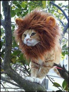 Lion...?