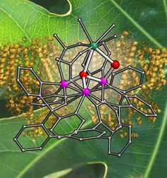 Picking Apart Photosynthesis - Chemists at the California Institute of Technology (Caltech) and the Lawrence Berkeley National Laboratory believe they can now explain one of the remaining mysteries of photosynthesis, the chemical process by which plants convert sunlight into usable energy and generate the oxygen that we breathe.