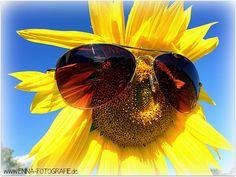 Sommer Sonne Sonnenschein Sonnenblume Sonnenbrille Summerfeeling