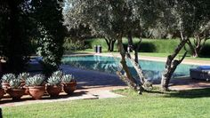 Scott Williams - Dar Ourika a Luxury villa in Morocco.. I love those potted blue agave!!