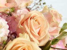 """Avalanche - Die Rose für die Liebe. Die Verwendung dieses Bildes ist für redaktionelle Zwecke honorarfrei. Veröffentlichung bitte unter Quellenangabe: """"Fachverband Deutscher Floristen e.V./ Blumenbüro"""