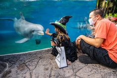 SeaWorld Orlando's Halloween Spooktacular will offer frightful fun in a safe, physically-distant environment. 🎃 Details: