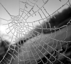 Frost on a spider web.  brivera:    Rope Ladder I by BombDog on Flickr.
