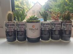 Beer and Wine Bottle Cactus and Succulent Planters Succulent Gifts, Succulent Planters, Cacti And Succulents, Wine Bottle Planter, Types Of Plants, Beer Bottle, Cactus, Seeds, About Me Blog