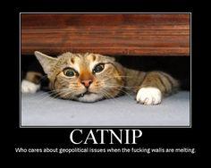 catnip_walls_melting.jpg 750×600 pixels