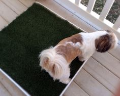 Diy Porch Potty · How To Make A Pet Accessory · Home + DIY on Cut Out + Keep