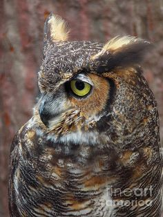 Wise old owl.