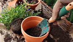 Basic gardening advice is available everywhere you look, but not all of it is right. Learn more from the authors of Decoding Gardening Advice. Garden Tool Shed, Garden Tool Storage, Patio Planters, Large Planters, Gardening For Beginners, Gardening Tips, Compost, Fall Containers, Container Gardening