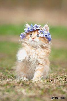 gatos com flores vintage - Pesquisa Google