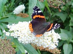 Weer: Vlinders in de winter