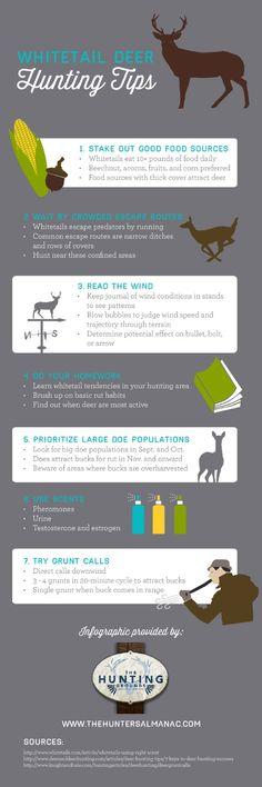 Whitetail Deer Hunting Tips
