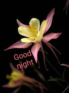 Good Night Thoughts, Good Night Wishes, Good Night Sweet Dreams, Good Night Image, Good Night Quotes, Good Morning Good Night, Day For Night, Good Morning Images, Morning Light